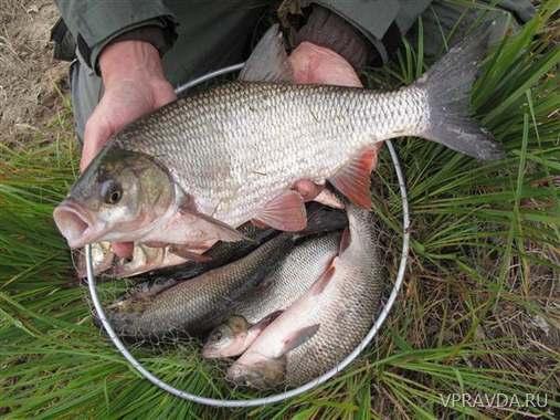 где клюет рыба в свердловской области