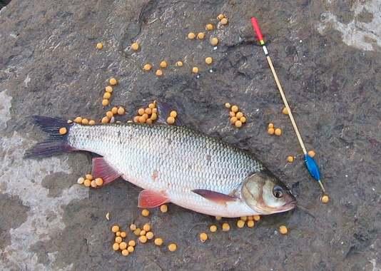 клюет ли рыба в полнолуние карась