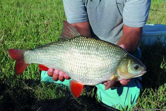 какая рыба клюет на реке колве
